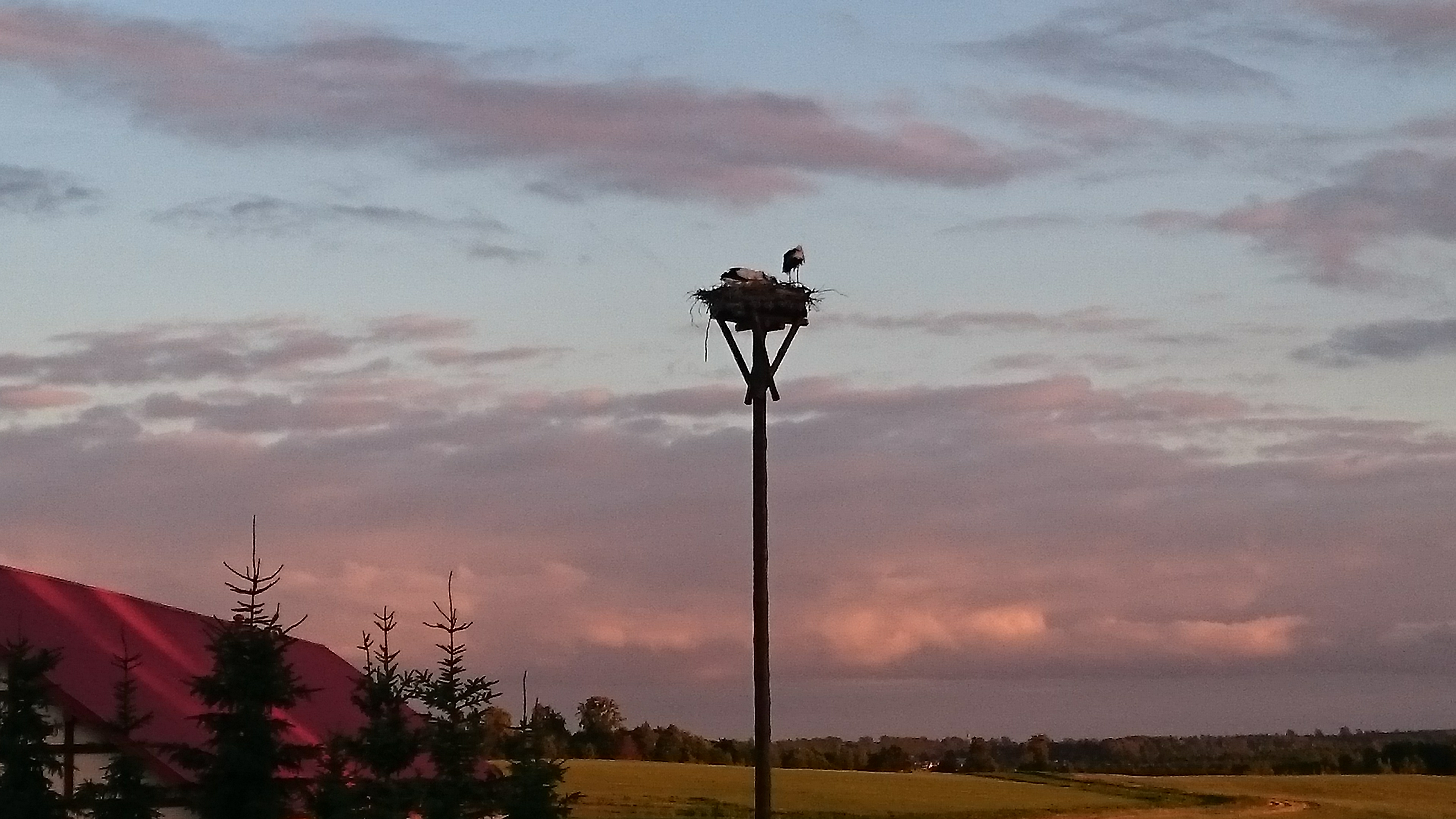 150805 Pocaltawo Stork